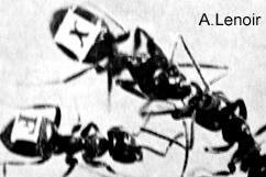 numerierte ameisen -- numbered ants